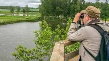 Lintujen seuranta Pohtiolammella | Sääksisäätiö